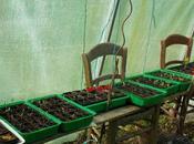semis envahissent serre