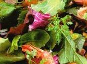 Mesclun nouveau aubergines crevettes