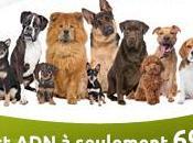 Déterminer race paternité chiens grâce test