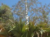 palmiers Madagascar proches l'extinction