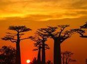 """Circuit Madagascar """"Paysages sacrés Lémuriens"""" avec Circuits Découverte Club Med."""