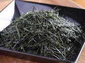 Sencha Dôsenbô, cultivar Kanaya-midori
