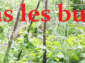petit tour dans buttes permaculture juin 2017