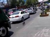 chien s'échappe dans grand Mexico