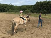 beauté chevaux