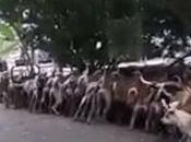 Temple thaïlande banquet journalier chiens