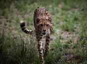 sixième extinction masse animaux s'accélère