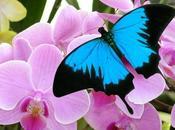 Jardins Papillons Battements d'ailes Route Vins d'Alsace