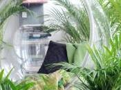conseils pour soigner plantes pendant cette période chaleur