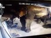 Hin, raids audacieux d'éléphants cooperative Durian (vidéo)