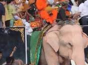 Surin, éléphants paradent pour Carême Bouddhiste (vidéo)