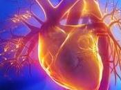RISQUE CARDIAQUE l'ADN poubelle contre cholestérol