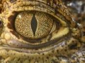 enfant jette plusieurs animaux d'un dans l'enclos crocodile vidéo)