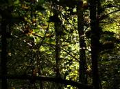 Ballade forêt d'Izeure