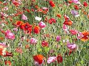 Faites fleurir biodiversité dans votre jardin