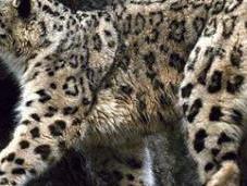 Asie, espèces menacées