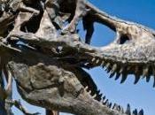 images crâne dinosaures contenait plus d'air matière grise