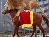 cavalier, mange lion