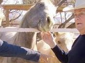 Quand célébrités viennent rescousse chevaux destinés l'abattoir: Jill Tony curtis