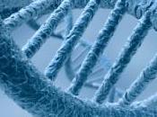 Importance gènes dans malformation bec-de-lièvre