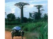 Nouvelles chroniques Madagascar