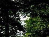 Forêt Tronçais