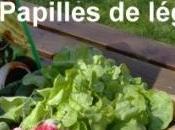 variétés légumes chaque saison