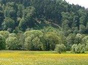 journée vélo vers Forêt Noire