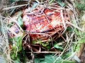 Représailles cruelles filet veau foin