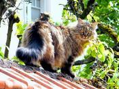 Portrait chat Teigne