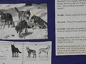 [classes]Carte d'identité loup [Flickr]