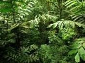 Investir dans biosphère serait plus rentable stockage géologique