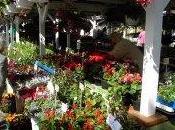 Tallinn: nouveau marché Nõmme