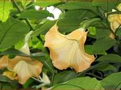 vous plantez plantes tahitiennes