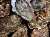 huîtres bassin d'Arcachon soumises test