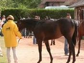 Vente yearlings (août 2009)