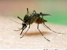 Eviter apaiser piqures d'insectes