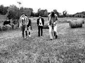 Brins d'herbe mélancolie sauvage