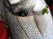 pêché dans baie Quiberon