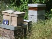 Débo testé pour vous récolte miel (partie hausses l'extraction