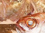 Consommer poisson manière responsable