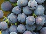 Youwine rendez-vous Jeudi: Meudon fête vignes