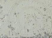 traces tracés volute ionique château Chambord (41)