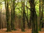 Forêt Tinner LoheTome
