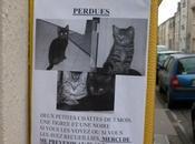 Chacun cherche chat
