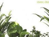coup frais dans intérieur avec plantes vertes