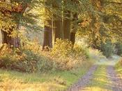 battements coeur automne...