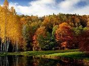 magie l'automne...