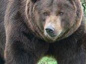 Vallorbe veut fosse ours sécurisée