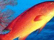 guide poissons Nouvelle-Calédonie